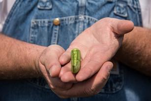 English peas: exploring the perfect pea, including recipes  Thumbnail