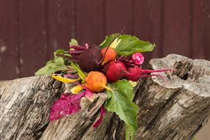 Health Benefits of Beets: They're Hard to Beat! Thumbnail