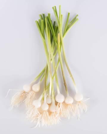 Allium-Leek-Traditioinal-Ultra-Isolated