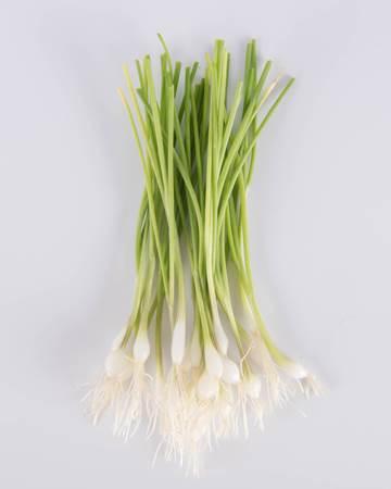 Allium-Onion-White-Coin-Petite-Isolated
