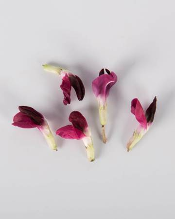 Edible-Flowers-Fava-Red-Isolated