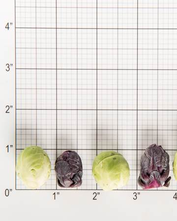 Cruciferous-Brussels Sprouts-Baby-Mixed-Size Grid