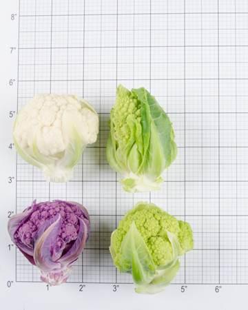 Cauliflower-Size Grid