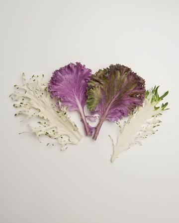 Cruciferous-Kale-Exotic-Summer-Isolated