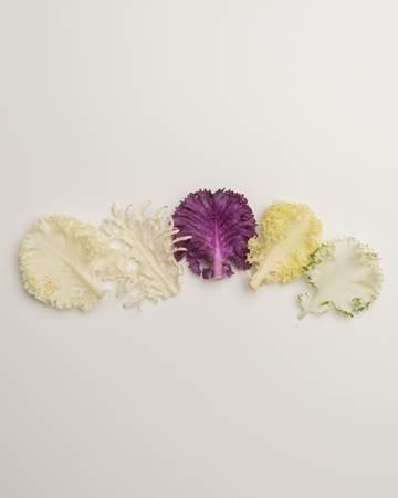 Cruciferous-Kale-Exotic-Petite-Isolated