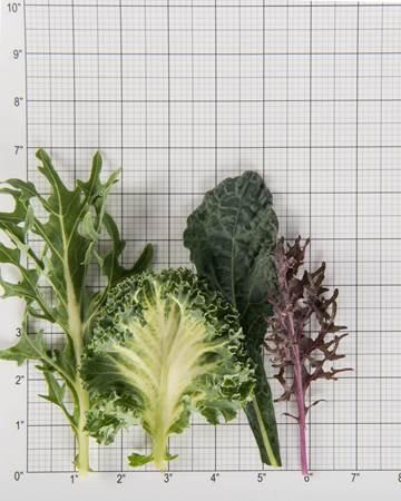 Cruciferous-Kale-Exotic-Summer-Size-Grid
