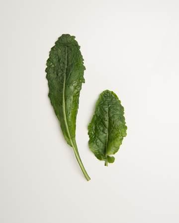 Kale-Lacinato-Baby-2