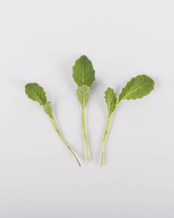 Petitie-Lacinato-Kale