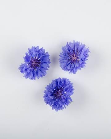 Blue Bachelor Button Flowers