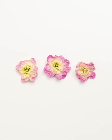 Edible-Flower-Mini-Floret-Blush-Rose