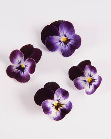 Edible Flower-Viola-Blackberry-Swirl-Isolated