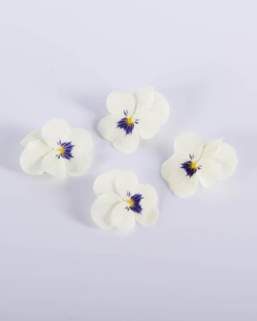 Viola-Blueberry-Cream-Isolated
