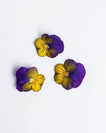 Blueberry Lemon Sorbet Viola