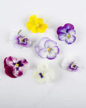Edible-Flower-Viola-Mix-Isolated