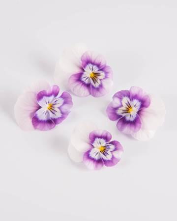 Edible-Flower-Viola-Red Raspberry Swirl-Isolated