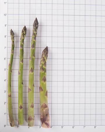 Asparagus-Green-Size-Grid