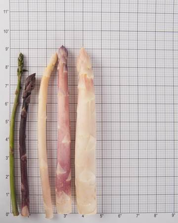 Mixed Asparagus Size Grid