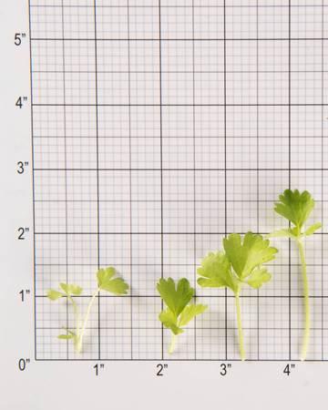 Celery Cutting-GH Petite-Size Grid