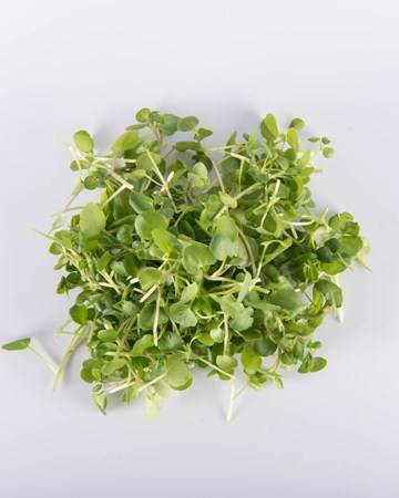 watercress-microgreens-isolated