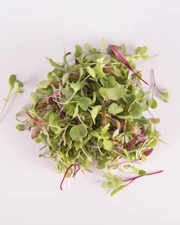 Greens-Salad-Sensation-Isolated