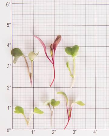 Greens-Salad-Sensation-Size-Grid