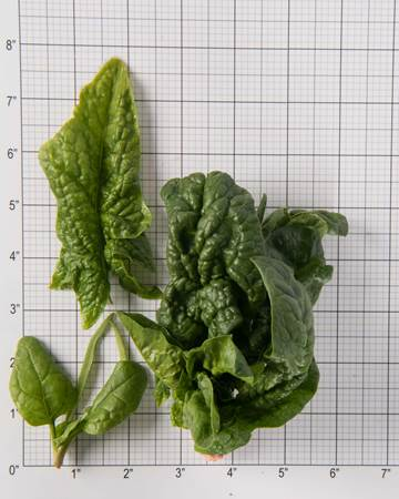 spinach-size-grid