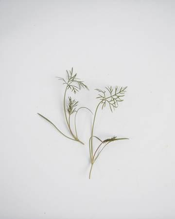 petite-bronze-fennel