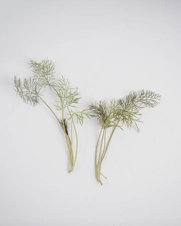 ultra-bronze-fennel