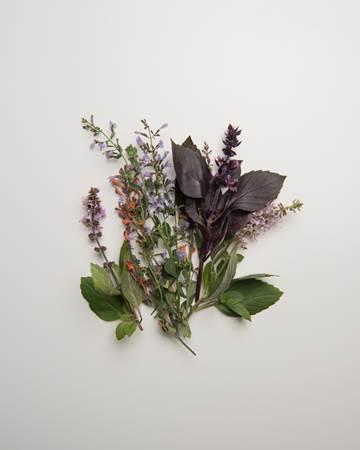 Herbs-Sampler-Flowering-Isolated