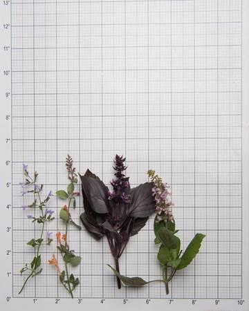 Herbs-Sampler-Flowering-Size-Grid