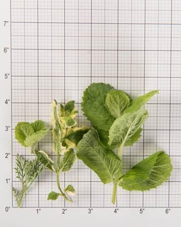 Herb-Sampler-size-grid