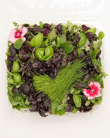 Blend-Petite-Herbal-Sensation-Isolated
