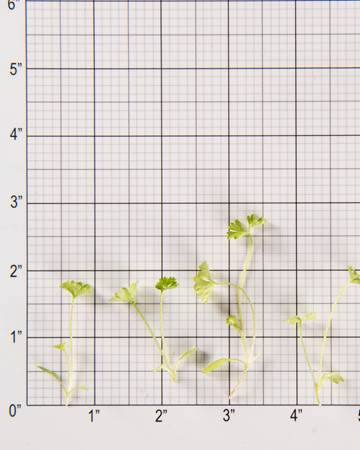 Parsley-Size Grid