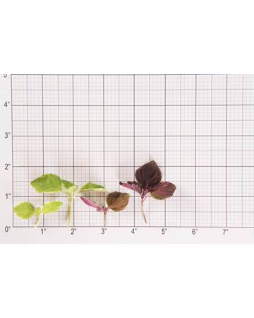Shiso-Mixed-Size Grid