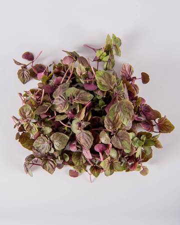 Shiso-Red-Micro-Isolated