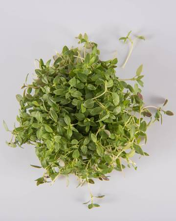 Thyme-Micro-Isolated