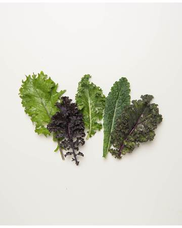 Baby-Kale-1-of-1-2