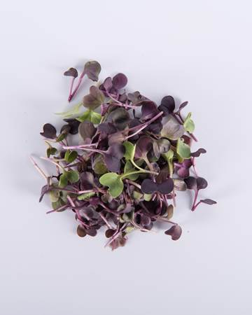 Microgreen_Purple-Radish_-Isolated