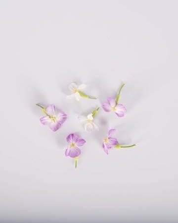 Edible Flower-Rat Tail Radish-Isolated