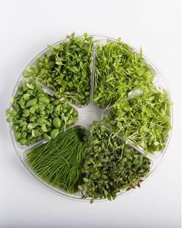 Fine Herbs Blend Small Bites