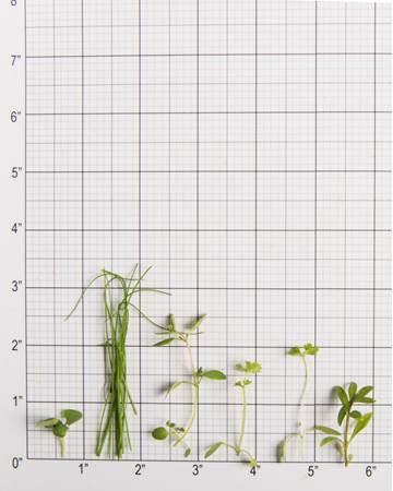 Fine Herbs Size Grid