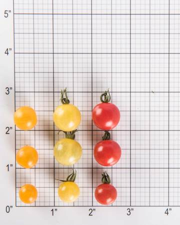 mixed-currant-tomato-size-grid