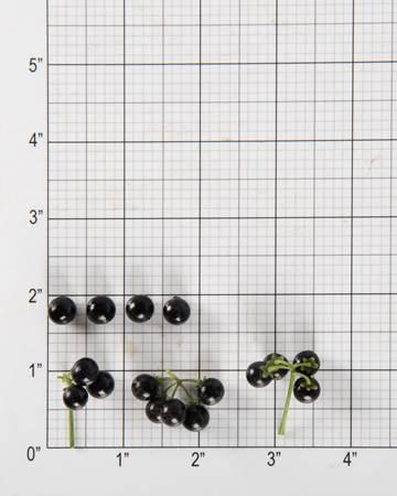 Tomatoes-Huckleberries-Size-Grid
