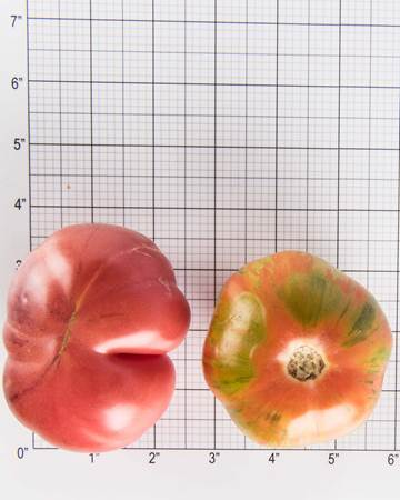 Tomatoes-Heirloom-Mix-Size-Grid