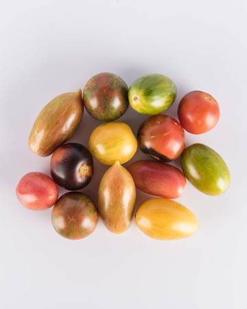 Tomatoes-Modern-Legacy-Mix-Isolated
