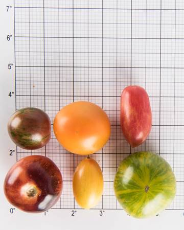 tomatoes-modern-legacy-mixed-size-grid