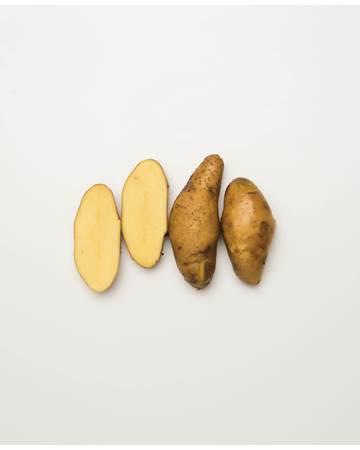 Potato-Austrailian-Cresent-B-1-of-1