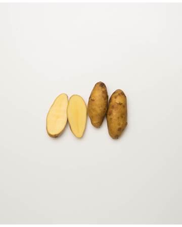 Potato-Austrailian-Cresent-C-1-of-1