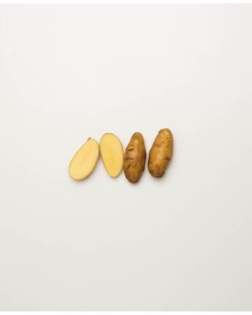 Potato-Austrailian-Cresent-D-1-of-1