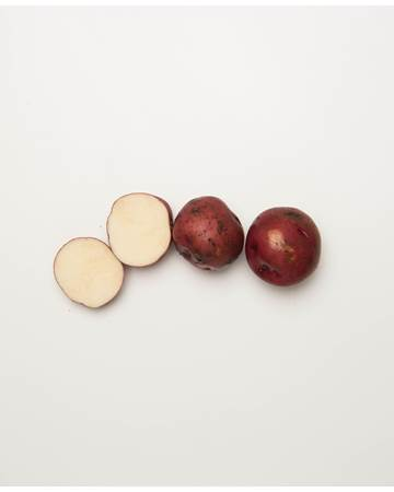 Potato-Dark-Red-Norland-C-1-of-1